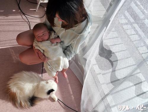 赤ちゃんとペットが仲良く共存できるための4つのポイント