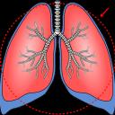 肺炎の特徴と対処