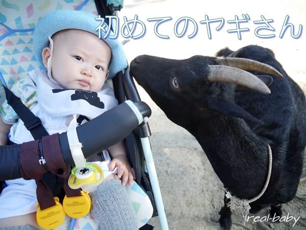 赤ちゃんを動物園に連れて行くと免疫力UP!のウソホント